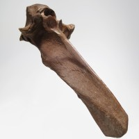 Tibetan shamanistic Implement in bone depicting a mask