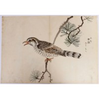 Japanese hand-painted drawing of a bird on a pine tree branch