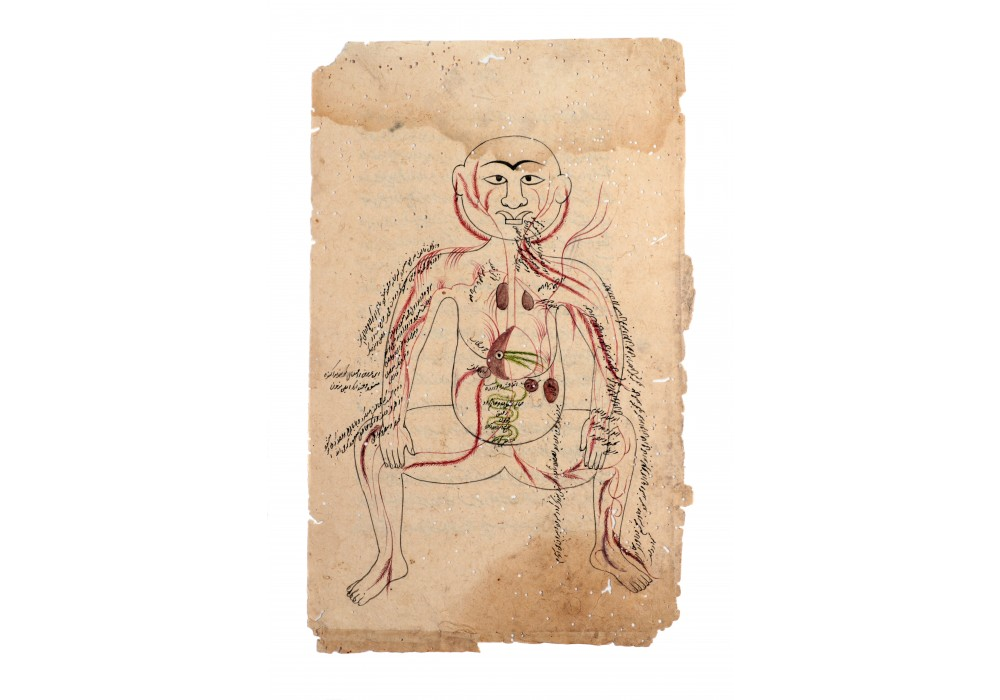 Indian anatomical illustration, 18th century