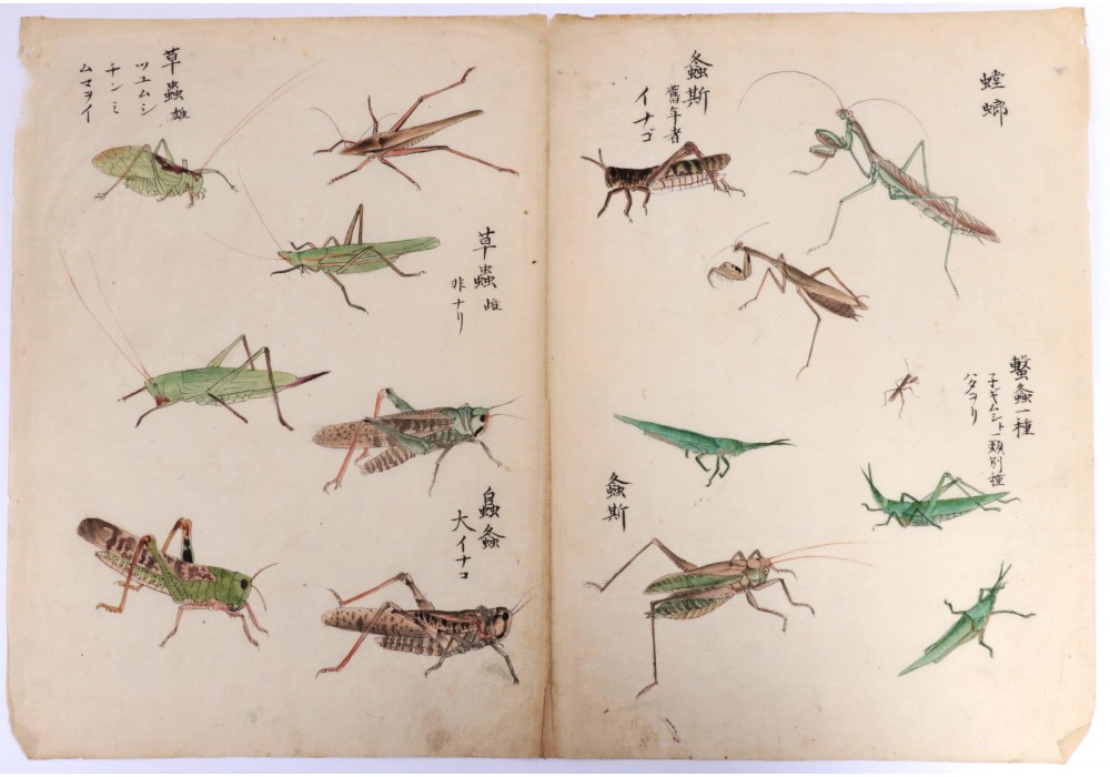 Japanese hand-painted drawing of insects