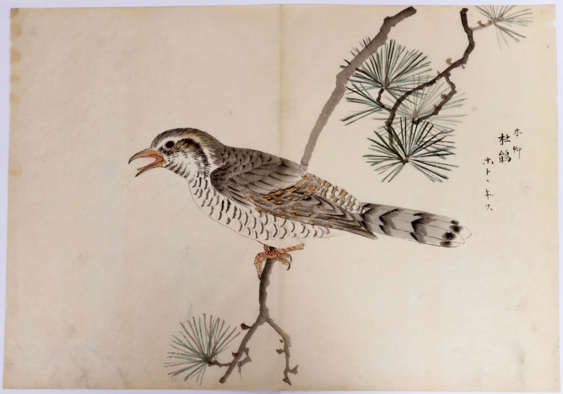 Oiseau Sur Une Branche De Pin Encre Et Couleurs Sur Papier Japon