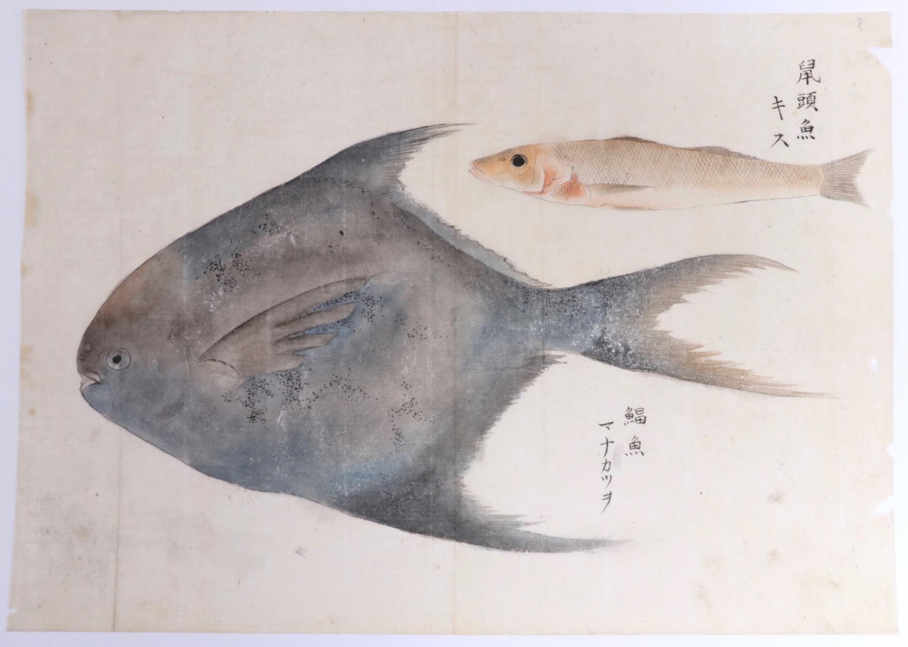 Charges de poissons datant