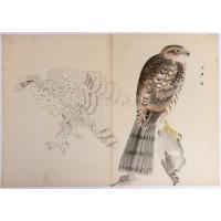Dessin aux deux faucons (?), encre et couleurs sur papier, Japon