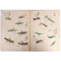 Dessin d'insectes dessinés et colorés à la main, Japon