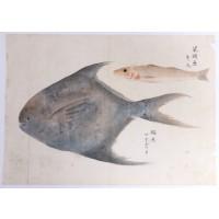 Dessin aux deux poissons, encre et couleurs sur papier, Japon