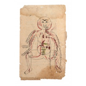 Indian anatomical illustration, 18th century
