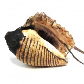 Conque/trompette Inca en coquillage